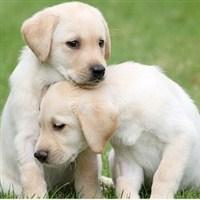 18 Leamington Spa & Guide Dogs