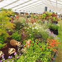 18 Hampton Court Flower Show